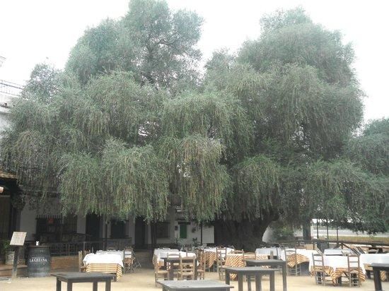 Restaurante Toruno: l'Acebuche et la terrasse du restaurant