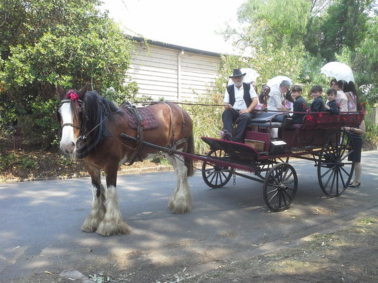 Morpeth Horse Carriage