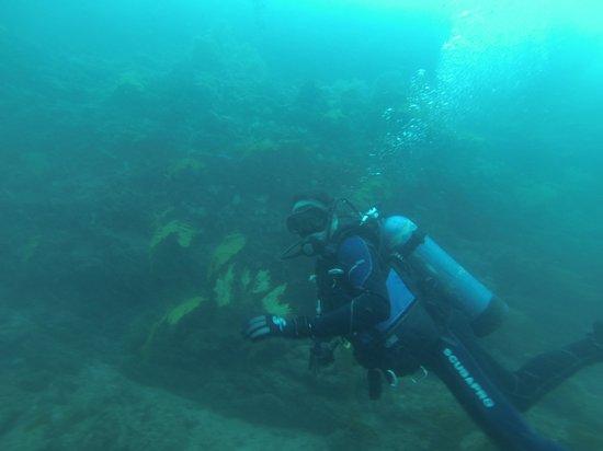 Ayangue, Ισημερινός: Durante la inmersion