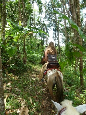 Panama Horseback Adventures: Tour through the jungle