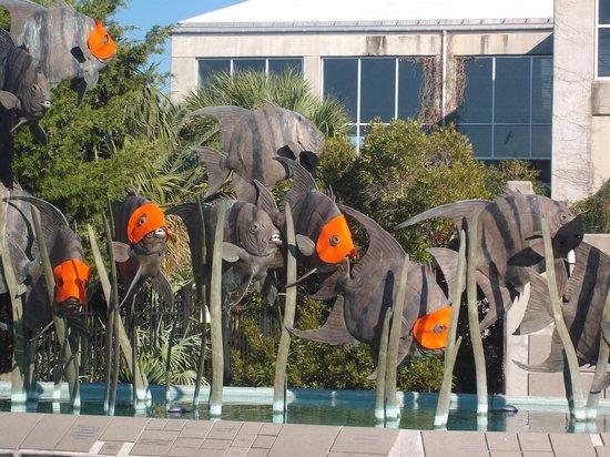 North Carolina Aquarium at Fort Fisher: Ready for halloween