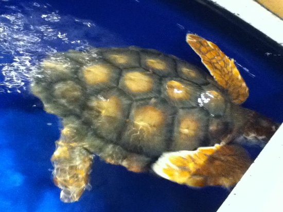 North Carolina Aquarium at Fort Fisher: Turtle