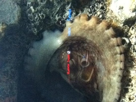 North Carolina Aquarium at Fort Fisher: He/She was hading from us