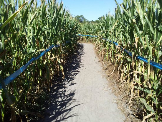 Long & Scott Farms: MAZE