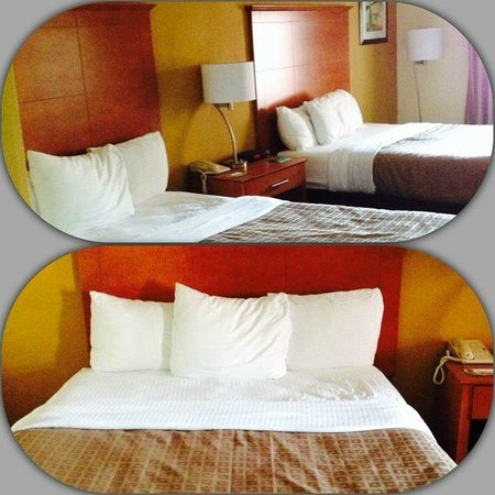 Quality Inn & Suites Shippen Place Hotel: the room