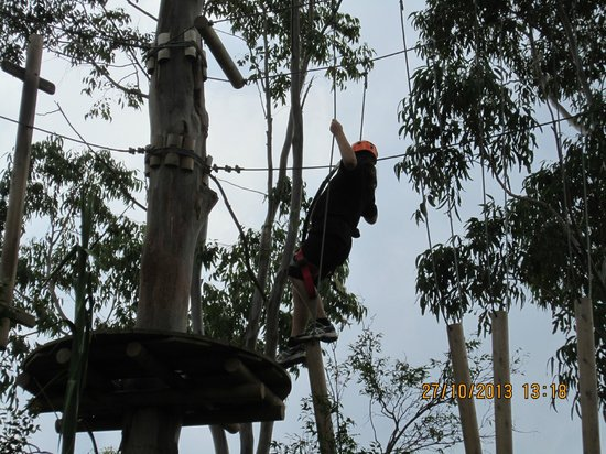 Urban Jungle Adventure Park: Monkey in the trees