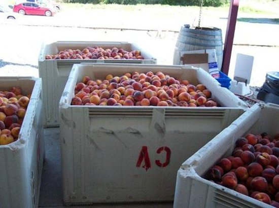 Carlson Vineyards Winery & Tasting Room: Local peaches for Peach wine