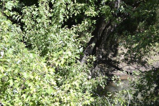 Honey Springs Battlefield: The Site of the Elk Creek Bridge Skirmish