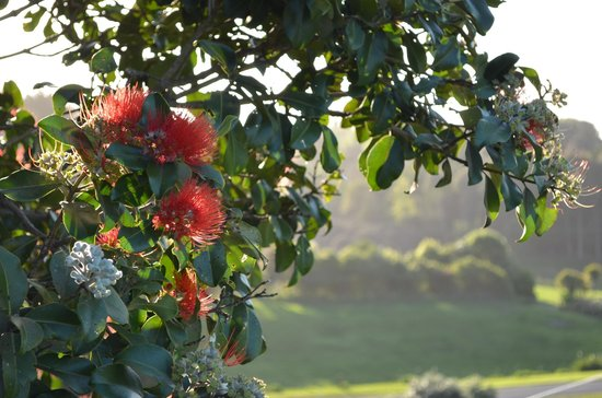 Vista del Sol: Beautiful grounds