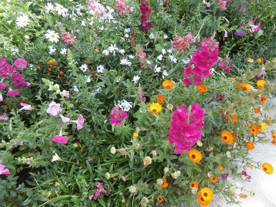 Le Vieux Cep: jardin