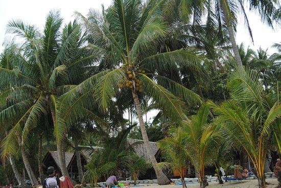 Lamai Coconut Beach Resort: alrededores