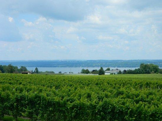 Three Brothers Wineries and Estates: Beautiful winery on Seneca Lake