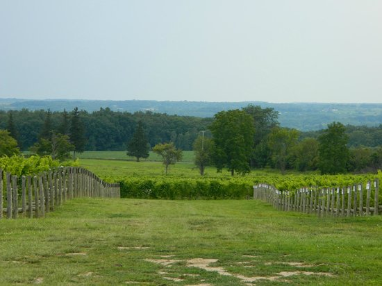 Three Brothers Wineries and Estates: Love this place!