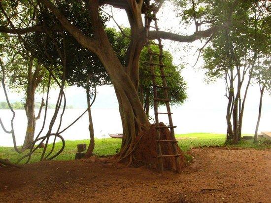 Amaya Lake : BBQ area with tree house