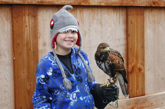 Ireland's School of Falconry : Ireland School of Falconry