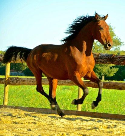 Mas d'Eymard : cheval du mas