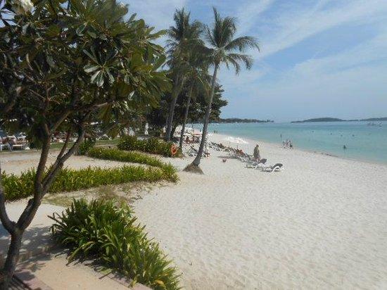 Centara Grand Beach Resort Samui: Beach View