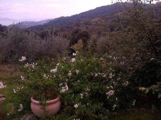Agriturismo La Montagnola: The view from the top of La Montagnola