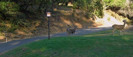 Big Sur Lodge: Tolle Natur, die Rehe waren morgens und Abends da