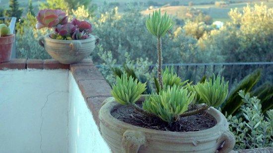 B&B Baia di Trentova: Plants and Olive Grove