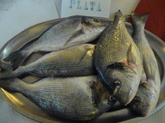 Mar de Plata: Le loup de mer
