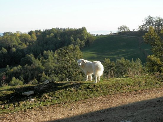 Agriturismo Lu Formaggio: Leone... cane pastore