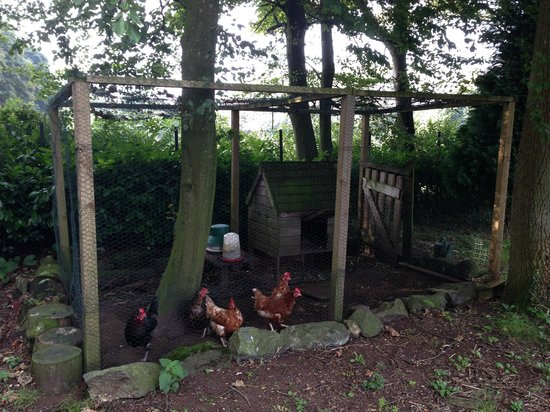 Detling Coachhouse: Chickens