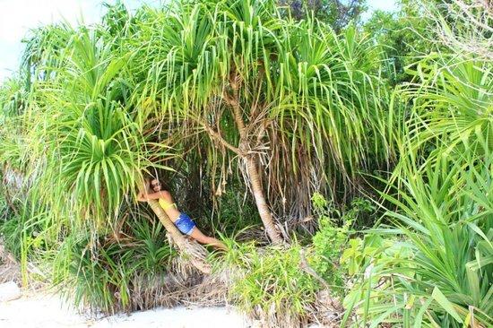 Celebes Beach Resort: Такая вот растительность