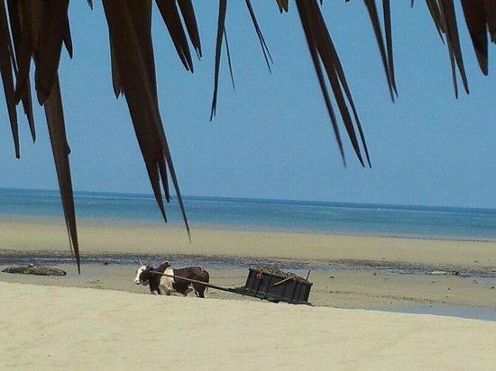 Orangea Village: In Spiaggia