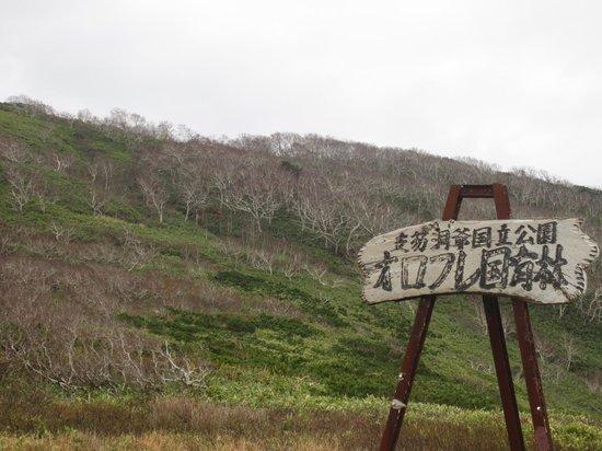 Orofure Pass: 白樺もまっすぐではありません