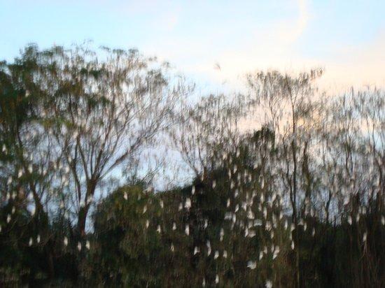 Termas de Jurema Resort Hotel: Revoada das gaivotas - todo entardecer