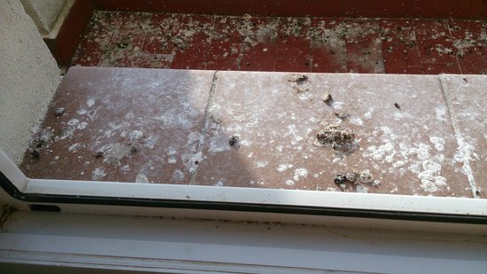 Hotel Juan Carlos I: La ventana de la habitación da a una terraza pequeña que esta llena de excrementos de palomas