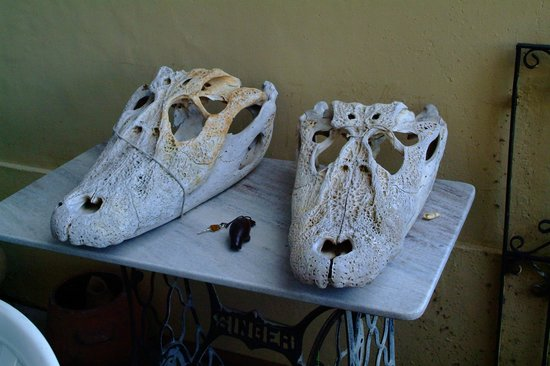 Chez Les Rois: Cool the croco's skulls