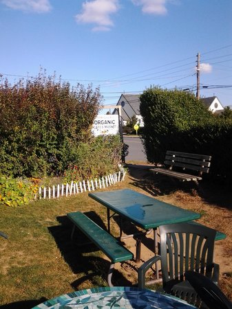 Naturally Good Foods and Cafe: Out back