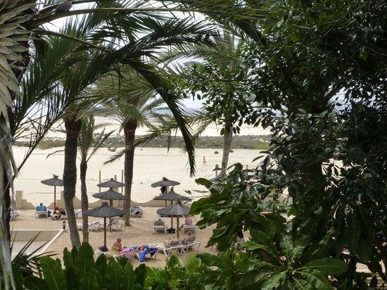 ClubHotel Riu Oliva Beach Resort : jardin