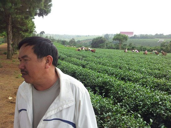 Da Lat, Vietnam: Tea plantation with Nghiep, awesome guy!!