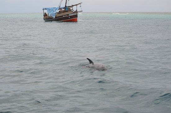 Wasini Island : Dolphin near the boat