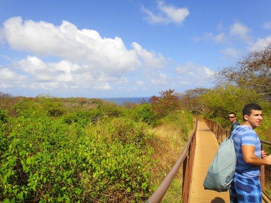 Baia do Sancho : 320 metros de trilha que dá acesso ao Sancho