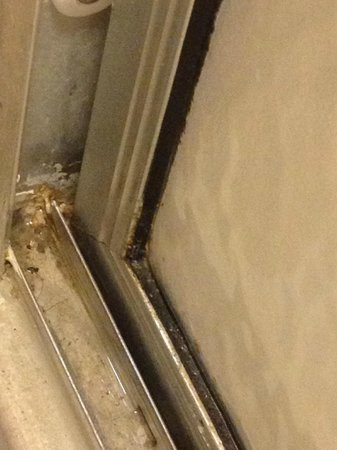 Hampton Inn Cherry Hill/Voorhees: dirt/mold growing in shower