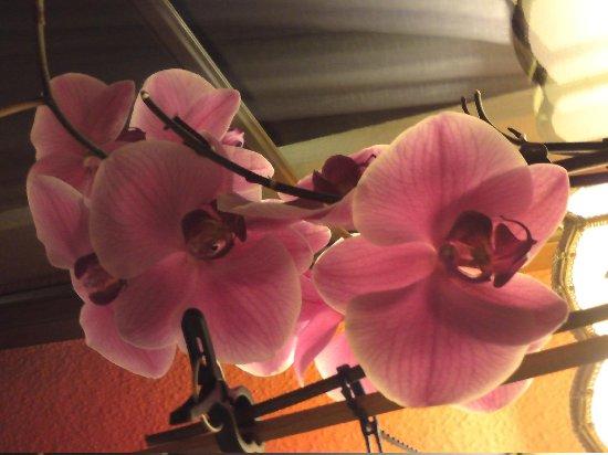 Gasthof Stadel: Orchideen-Flair in der Gaststube