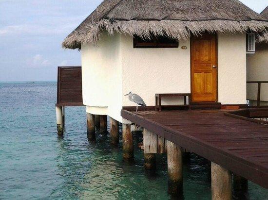 VOI Dhiggiri Resort : Overwater n.1
