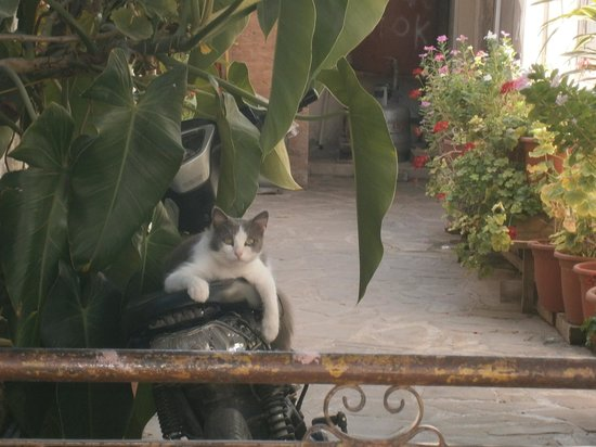 Stratos ArtDeco House : a Kalavassos cat