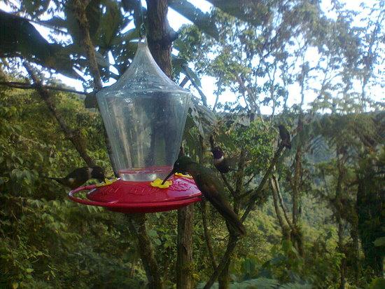 Bio Hostal Mindo Cloud Forest: colibries