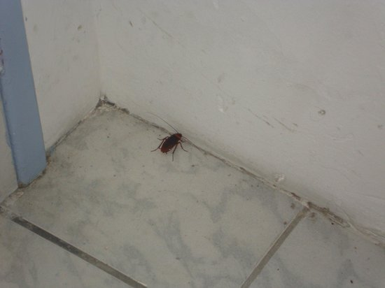 Hotel Planeta Itapua : Essa é a barata que vive no quarto.