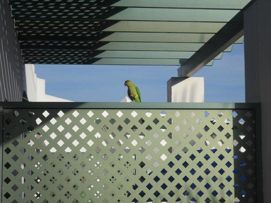 Las Marismas de Corralejo: Parakeet on our balcony