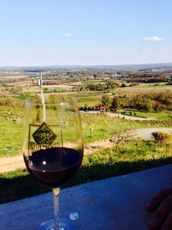 Bluemont Vineyard: overlooking the area