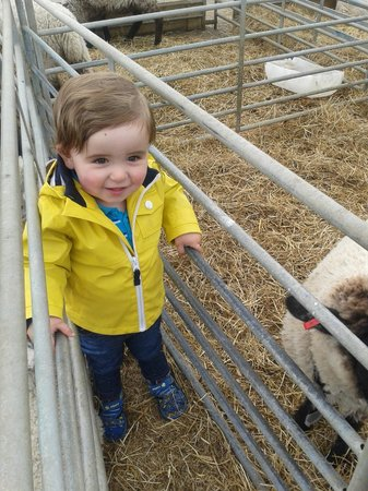 Hall Hill Farm: Ben loving the sheep!