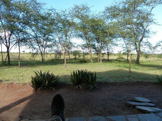 Serengeti Tented Camp - Ikoma Bush Camp: Blick aus dem Zelt
