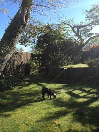 B&B @ The Redwoods: Nice backyard area