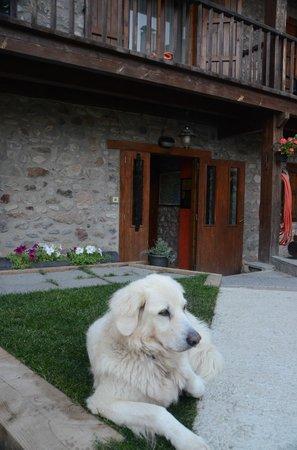 Hotel Cal Rei de Tallo : Max enjoying the hotel entrance